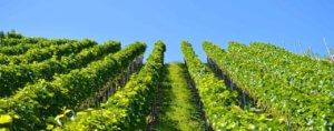 les vins du Luberon