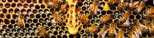 apiculture luberon
